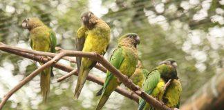 aviario-nacional-de-colombia